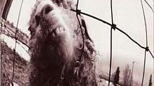 Grunge: Top 50 melhores álbuns pela Revista Rolling Stone - nº 10