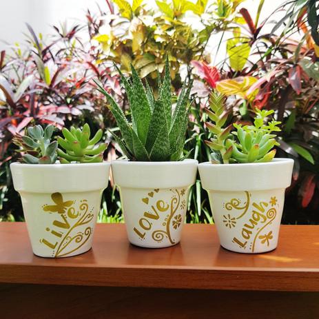 Plantas 1.jpeg
