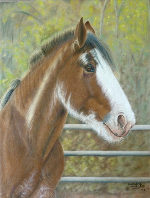 Young Clydesdale, Framed Original