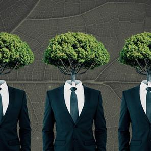 Green Branding: come le aziende posso fare innovazione sostenibile