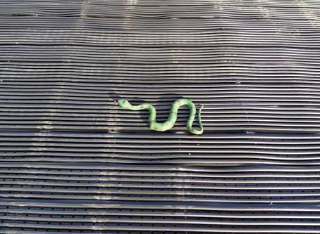 Rubber Snakes - The Solar Pool Heating Ally!