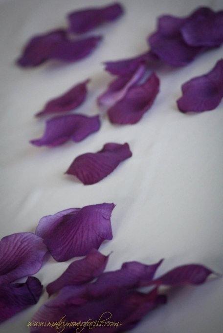 Petali di rosa viola