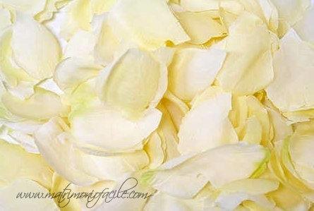 Petali di rosa avorio
