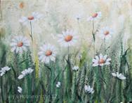 Spring Daisys.jpg