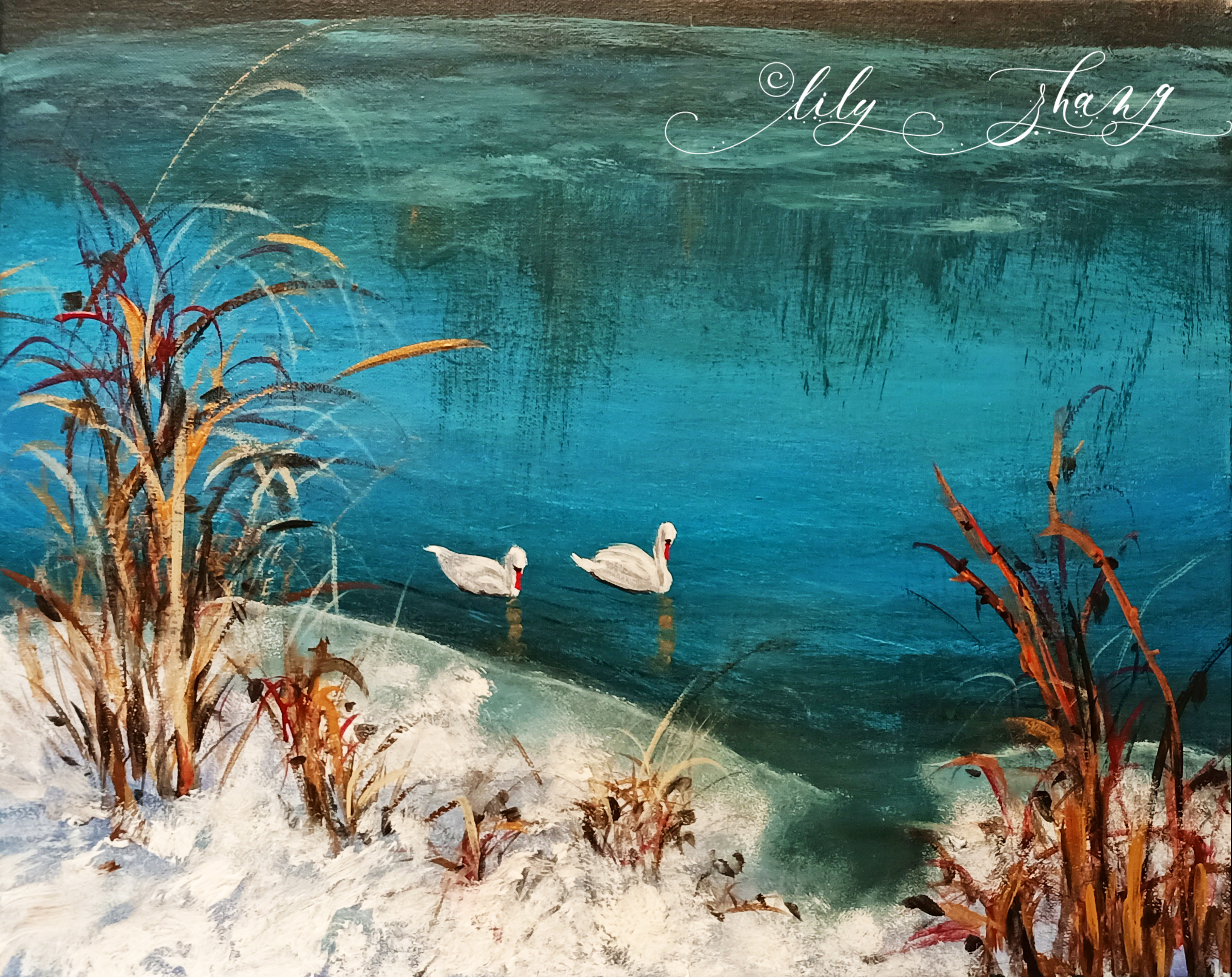 Swans on 12 mile creek