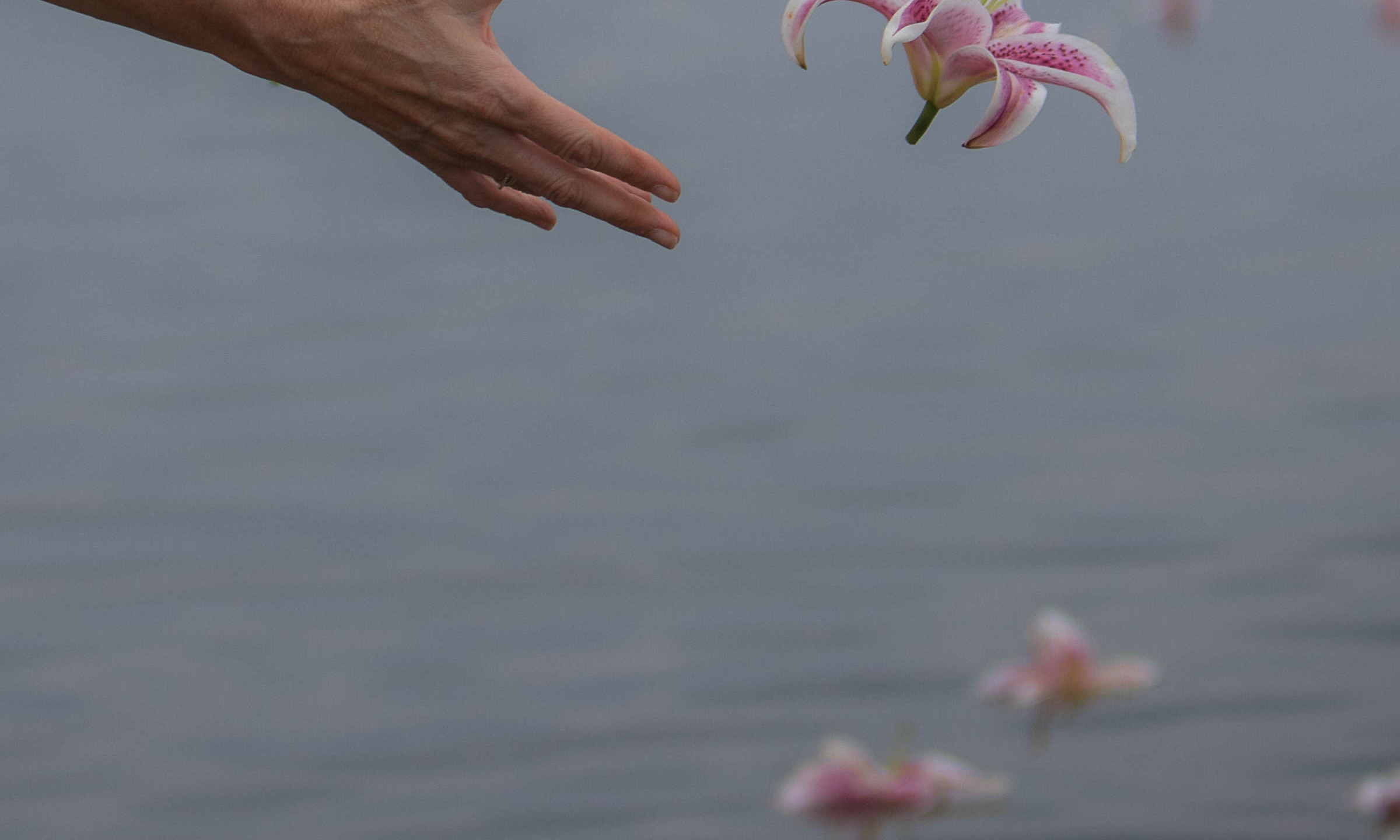 Lilies on the River