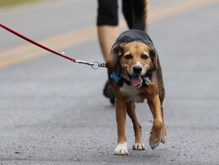 Race4Love is Dog Friendly!