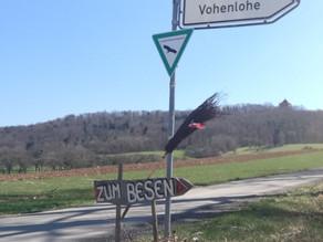 春のドイツ ワイン農家レストランBesen ベーゼン