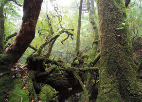 屋久島ひとり旅 其の二 もののけの森 白谷雲水狭