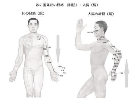 陰ヨガ 秋の経絡 肺・大腸