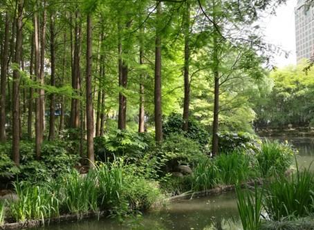 上海の公園