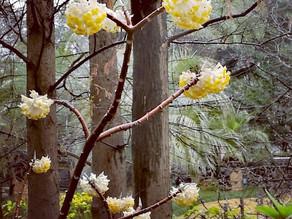 春の上海。春の花市場。