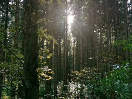 森の呼吸と都会の呼吸