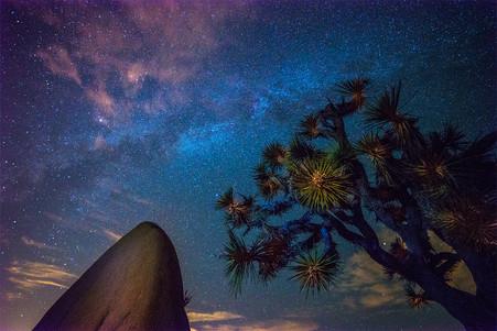 Milky Way Joshua Tree