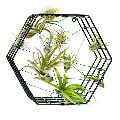 wire hexagon air plant display