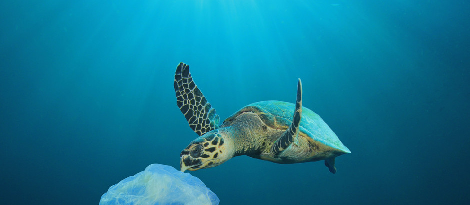 13.000.000 toneladas de plástico se filtran en el océano cada año