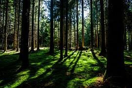 Sahanperän Savotta - Koko perheen metsätapahtuma Rovaniemellä 10.9.2017 klo 10:00-17:00
