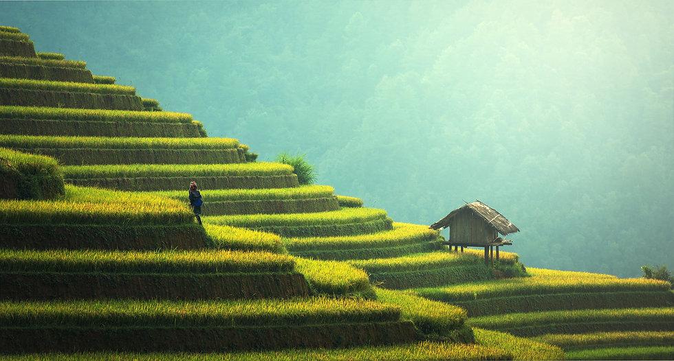 agriculture-1807581.jpg