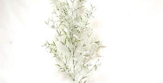 Ветвь погонатерума H114 см, заснеженная, пластик, зелёный