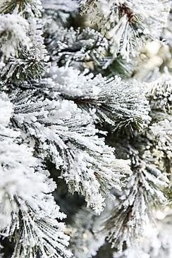 How To Flock A Christmas Tree.jpeg