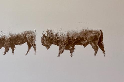 """Tatanka"" by Arland Ben"