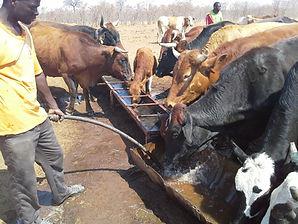 Brumby Pumps in Botswana