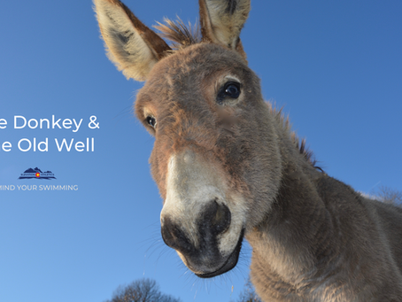 The Donkey & The Old Well