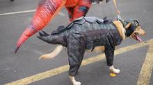contest dog.jpg