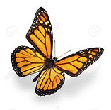 6157610-papillon-monarque-isolé-sur-fond