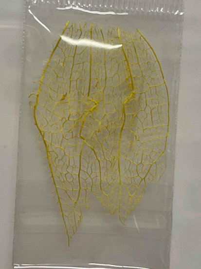 Yellow dried leaf