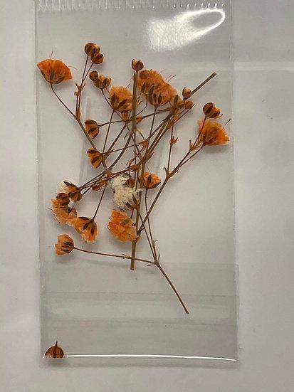 Orange dried flowers