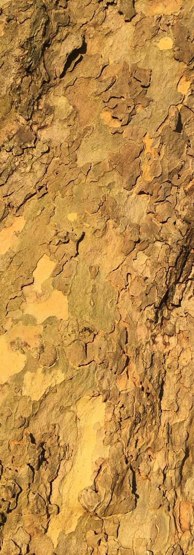 L'arbre en Or, Ile de Puteaux, 2018
