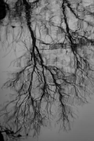 Reflectd Branches