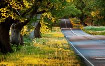 I - Golden Sunlight.jpg