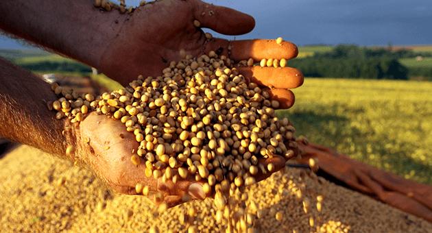 Mato Grosso puxa o ritmo da colheita de soja 17/18 no Brasil