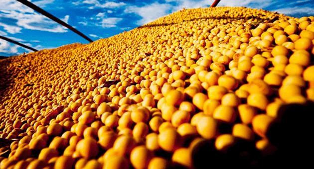 Imea reduz projeção de custo para produção de soja na safra 2019/2020