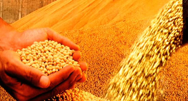 Colheita de Soja avança e atinge 60% da área plantada no Mato Grosso