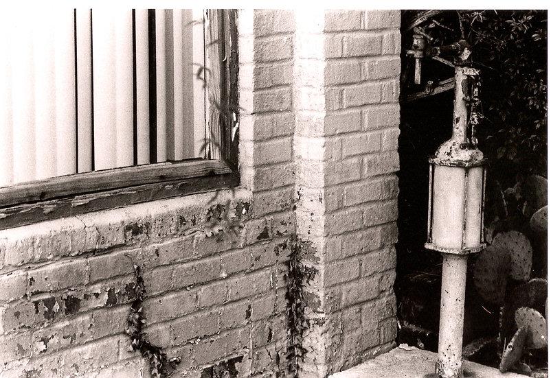 Brick Wall, Window and Cactus