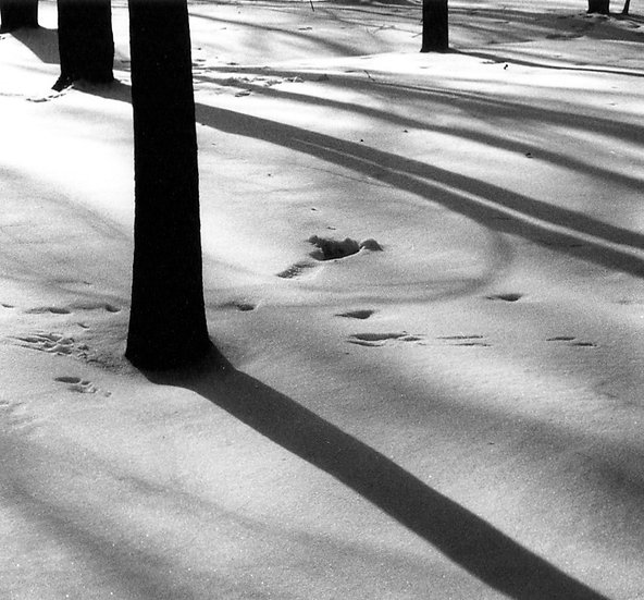 Snowy Shadow