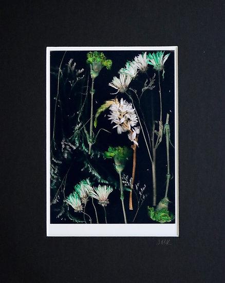 Scanned Flowers II