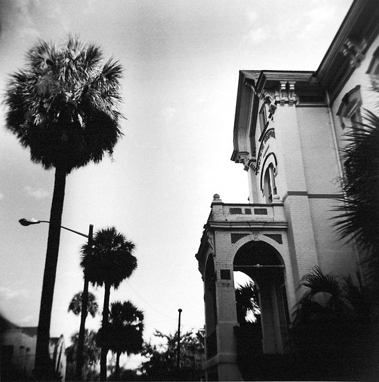 Savannah Palm Trees