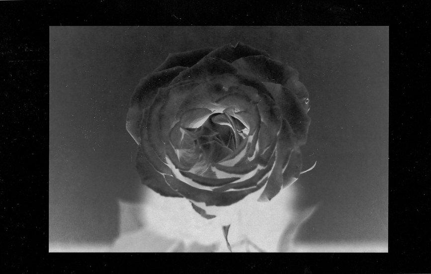 Solar Rose