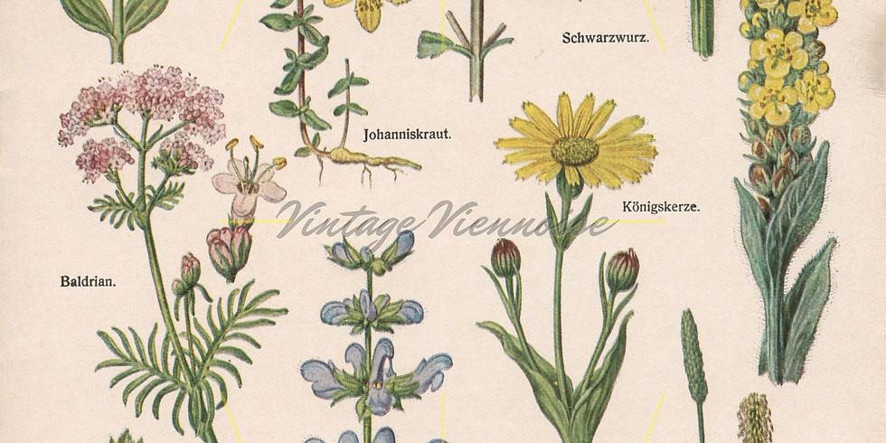 SHSG May 2020: Basic Botany for Plant ID