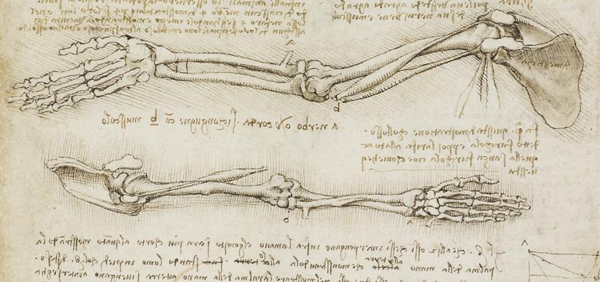 References-Draw-da-Vinci-Arms.png