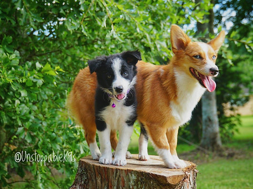 Puppy Imprinting Lodge and Train