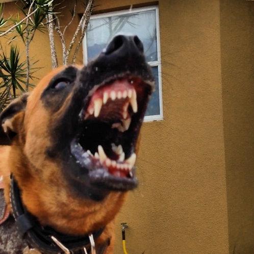 Behavior Problem Dog Boarding