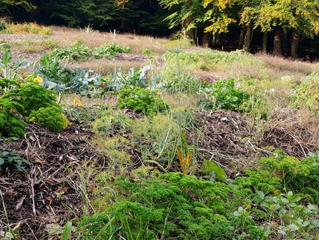 Kräutergarten / Herb garden