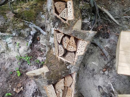 Wildbienenhäuser / Wild bee hives