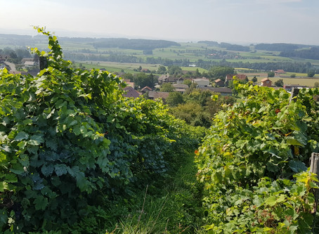Bio Weinbaukurs / Organic viticulture course