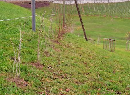 100 neue Sträucher und Hecken / 100 new shrubs and hedges